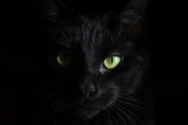 Do you really believe black cats brings bad luck? It is time to Break the Myths and Face the Truth.